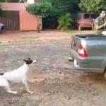 Tierschützer machen mobil