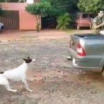 Wieder Hundefolterer gefilmt