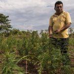 Marihuana-Bauern fordern staatliche Unterstützung