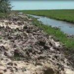 Reisbauern verursachen Trockenheit