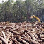 Kein Wahlkampfgeplänkel: Cartes ließ 2 Millionen Bäume abholzen