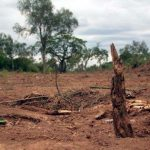 WWF klagt wegen verfassungswidrigem Cartes-Dekret zur Abholzung