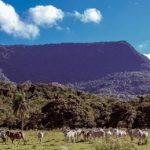 Der Reichtum vom Ybytyruzú Gebirge wird zum Fluch