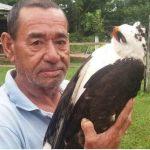 Ein getöteter Adler zieht Kreise