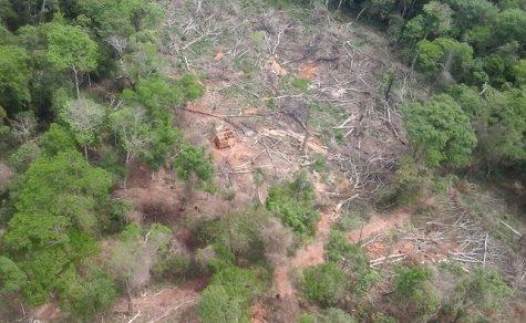Die Abholzung schreitet unkontrollierbar voran