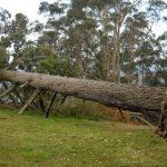Tod beim Baumfällen