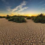 Extreme Trockenheit führt zu Problemen in der Landwirtschaft