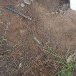 Exhumierung bringt Mutter in Bedrängnis