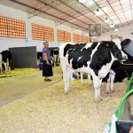 Überproduktion an Milch