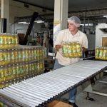 Produktion von Ölsaaten eingestellt