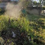 Dengue: Asunción ruft den Umweltnotfall für 90 Tage aus