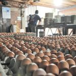 Massiver Schmuggel von Eiern