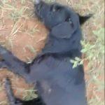 Ex-Militärangehöriger erschießt drei Hunde