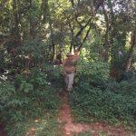 Puma gesichtet, aber er entkam den Jägern