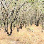 LKW mit Quebracho-Stämmen im Chaco beschlagnahmt