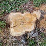 Staatsanwaltschaft klagt drei Personen wegen illegaler Abholzung an