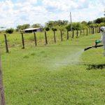 Verbotenes Insektizid in mehreren Ländern kommt in Paraguay zum Einsatz