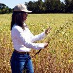 Neue Sorte von Sojabohnen sorgt für Aufsehen