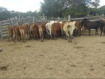 Chaco: Senacsa-Beamte wegen Viehdiebstahls und Fleischtransports in einem Dienstfahrzeug verhaftet
