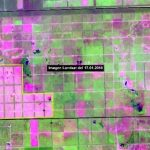 Infona entdeckt 10.000 Hektar gerodete Waldfläche im Chaco
