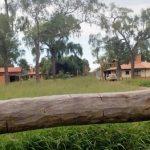 Cartes erholt sich im Chaco