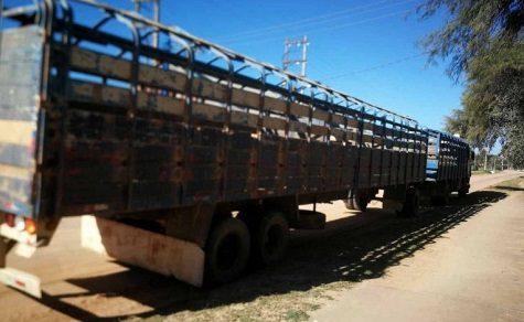 Mehr als 2.000 Rinder von einer Estancia im Chaco gestohlen