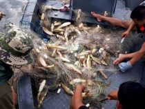Strikte Kontrollen verärgern Fischwilderer