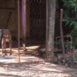 Beißwütige Hunde sorgen für Unruhe