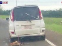 Keine Gnade: Hund hinter einem Auto hergezogen