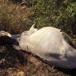 Viehdiebe im Chaco schlagen wieder zu