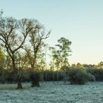 Milder Winter prognostiziert