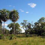 Chaco: Ein Disput um mehr als 4.000 ha