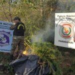 Auch im Departement Paraguarí wird Marihuana angebaut