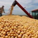Paraguay liegt weltweit an dritter Stelle beim Export der Soja