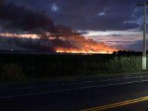 Waldbrände: Ein Jahrzehnt muss vergehen, bis das Ökosystem wiederhergestellt ist