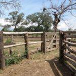 Chaco: Viehdieb von Capataz erschossen