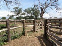Der verzweifelte Kampf einer Familie um ihre Estancia im Chaco