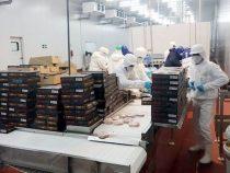Fleischskandal wurde mit Bestechungsgeld beigelegt