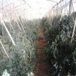 Frostwarnung für alle Landwirte
