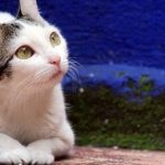 """Katzen misshandelt und getötet im """"Spiel"""" von San Juan"""
