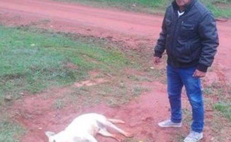 Ein Nachbar tötet Hunde und Katzen