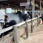 Millionen von Liter Milch gingen verloren