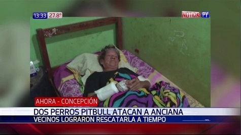 Pitbulls greifen ältere Frau an
