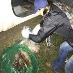 Chaco: Wilderer in Kontrolle getappt