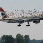 Gefahr von Vogelschlag am Flughafen Silvio Pettirossi könnte ansteigen