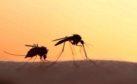 West-Nil-Virus: Es gibt eine Warnung für Paraguay