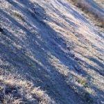 Deutsche Kolonisten klagen über Frostschäden