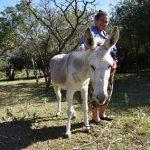 Die letzten Eseltreiber fordern die Zeit heraus