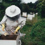 7 Ranger greifen Honigsammler an