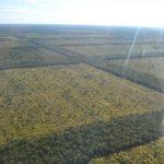 Ishir im Chaco zahlen dafür, um Wälder zu erhalten